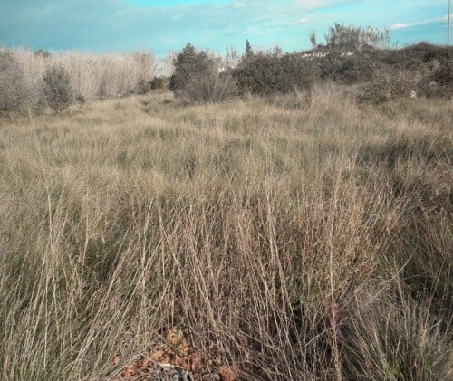 Foto de paisaje semidesértico en Oliva
